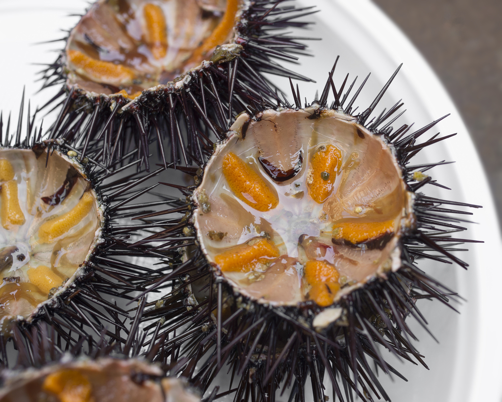Sea Urchins - A specialty in Sicily. Buonissimi!